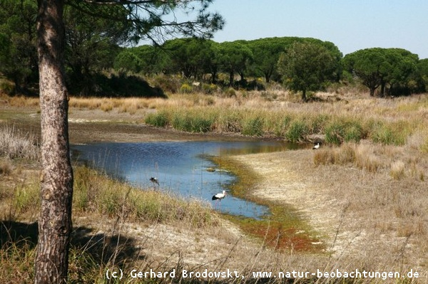 Nationalpark Donana in Andalusien
