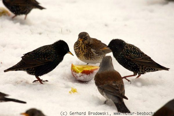 vögel zählen garten