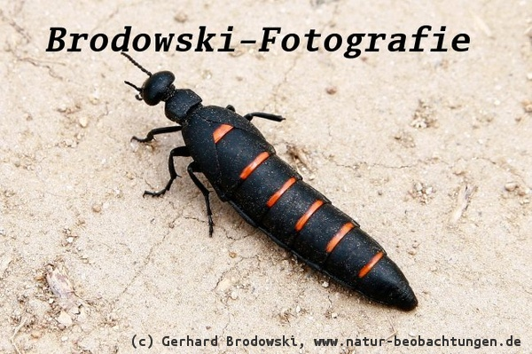 Insekten Bestimmen Steckbrief Kafer Namen Feinde Grosse Bilder