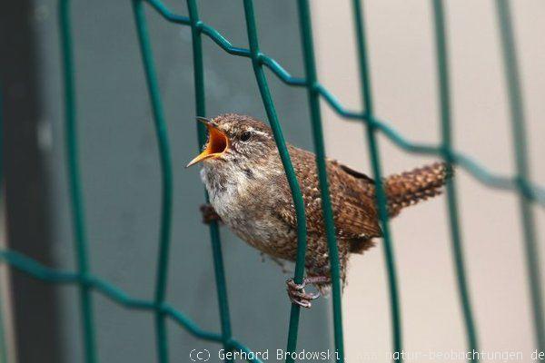 lauter seltene vögel