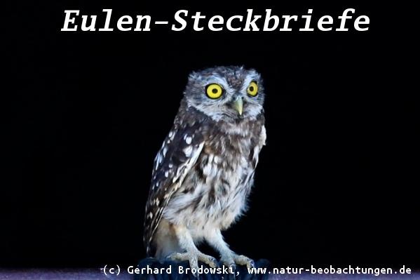 Tiersteckbriefe hund katze maus gr e alter nahrung bilder natur beobachtungen - Steckbrief feldhase grundschule ...