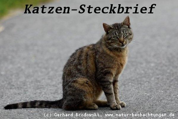 tiersteckbriefe katze maus hund pferd schlange gre alter - Muster Tierbeschreibung