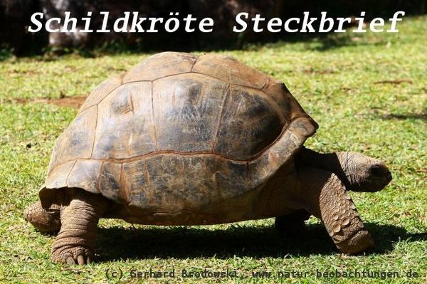 bild igel und schildkröte