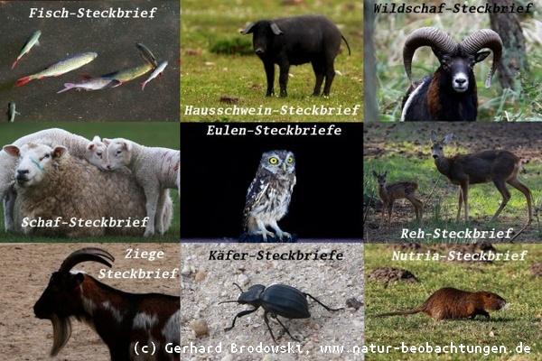 Tiersteckbriefe - Hund, Katze, Maus, - Größe, Alter, Nahrung, Bilder ...