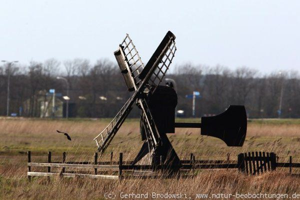 Windmühle auf Texel in Holland