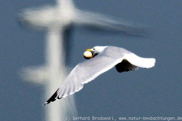 vogelgeschichten vogel kurzgeschichten natur beobachtungen