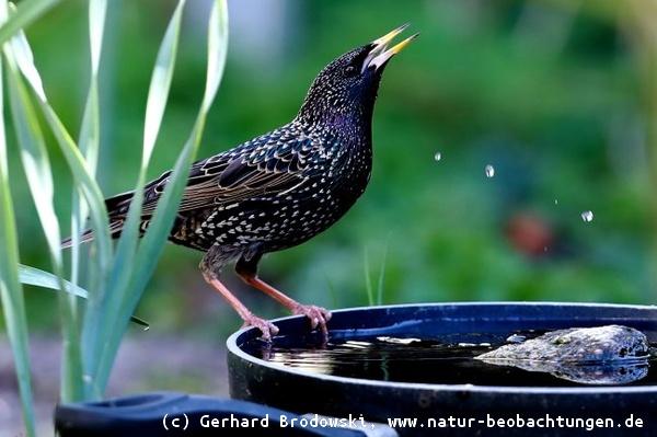 Etwas Neues genug Vogeltränke im Winter & Sommer aufstellen - Tipps & Infos - Bilder &PI_83