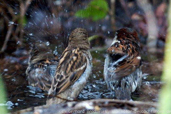 vögel trinken bei frost