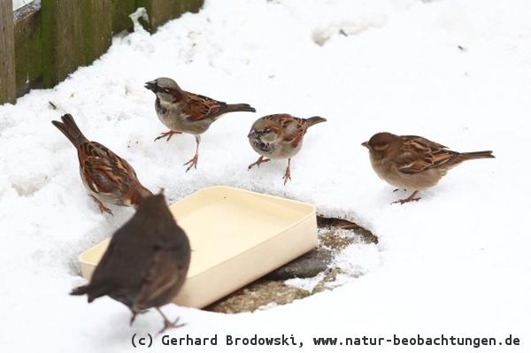 Vogeltränke im Winter & Sommer aufstellen - Tipps & Infos - Bilder ...